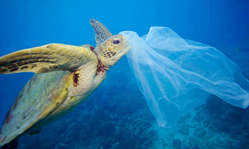 reduce the use of plastic bags