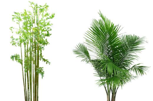 bamboo vs palm leaf plates
